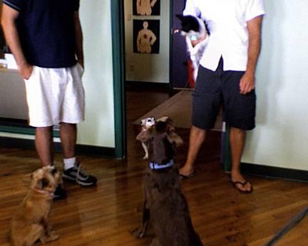 Dog Master One