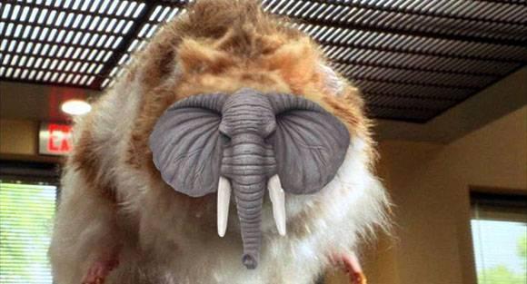 giant_hamster_elephant_head