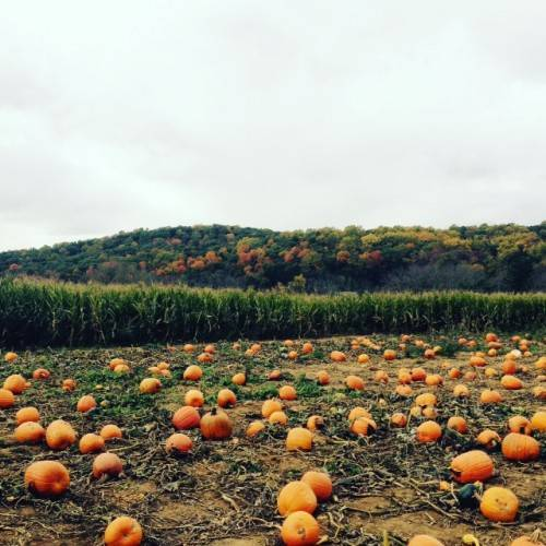NJ pumpkin patch