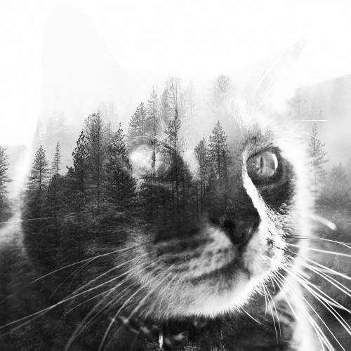 cat_overlay_2
