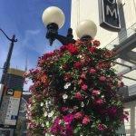 Flowering street lights downtown