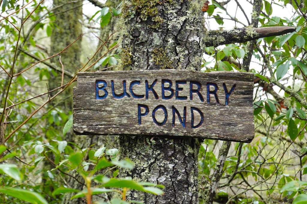 buckberry pond